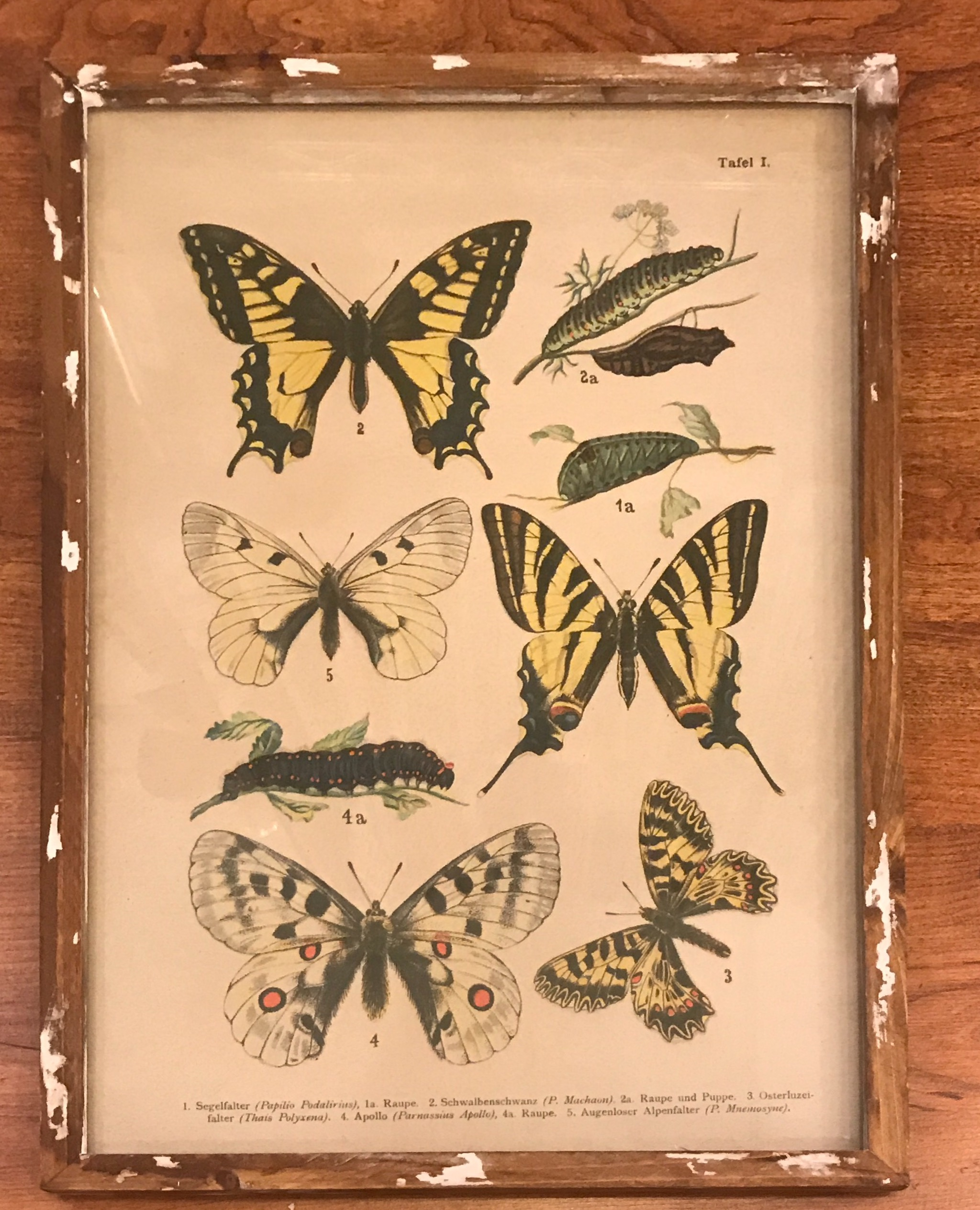 Butterfly Wall Art - Mizell Interiors