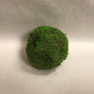 Moss Balls 1