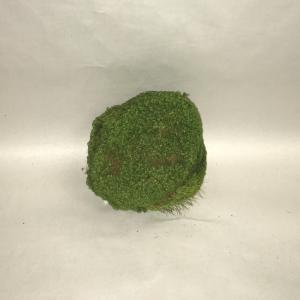 Moss Balls 2
