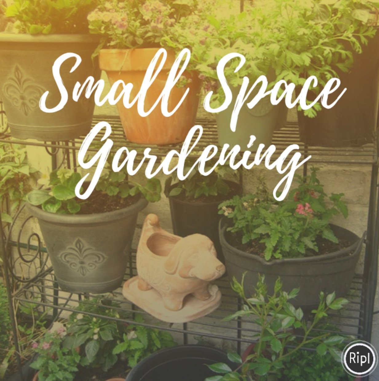 Small Space Gardening - Mizell Interiors